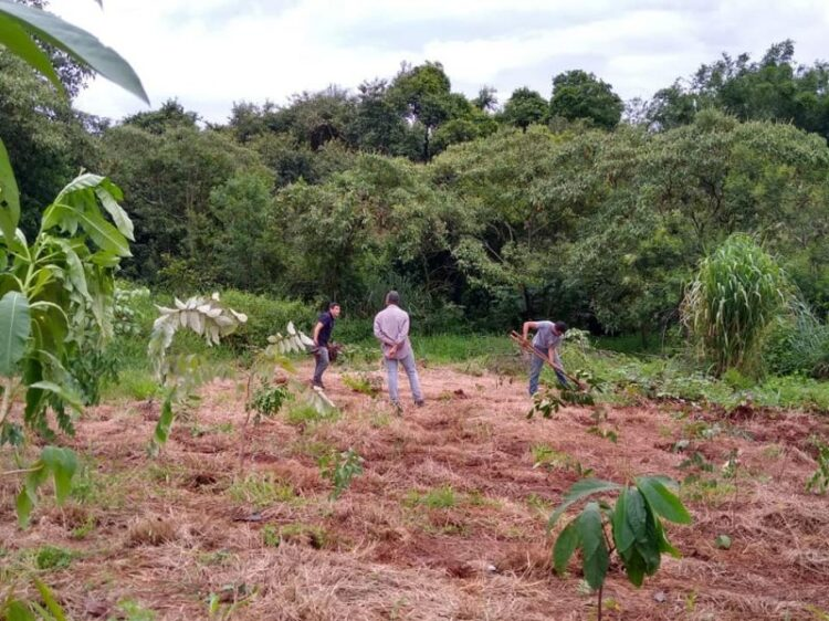 Meio Ambiente realiza plantio 230 mudas no Núcleo Campos Sales