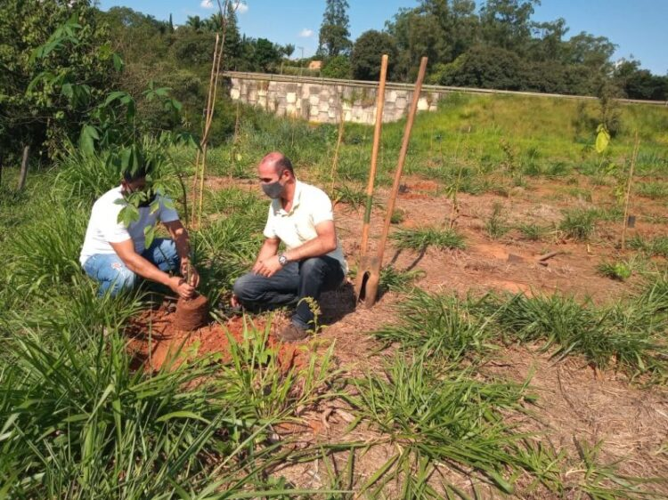 Secretaria de Agricultura e Meio Ambiente realiza plantio