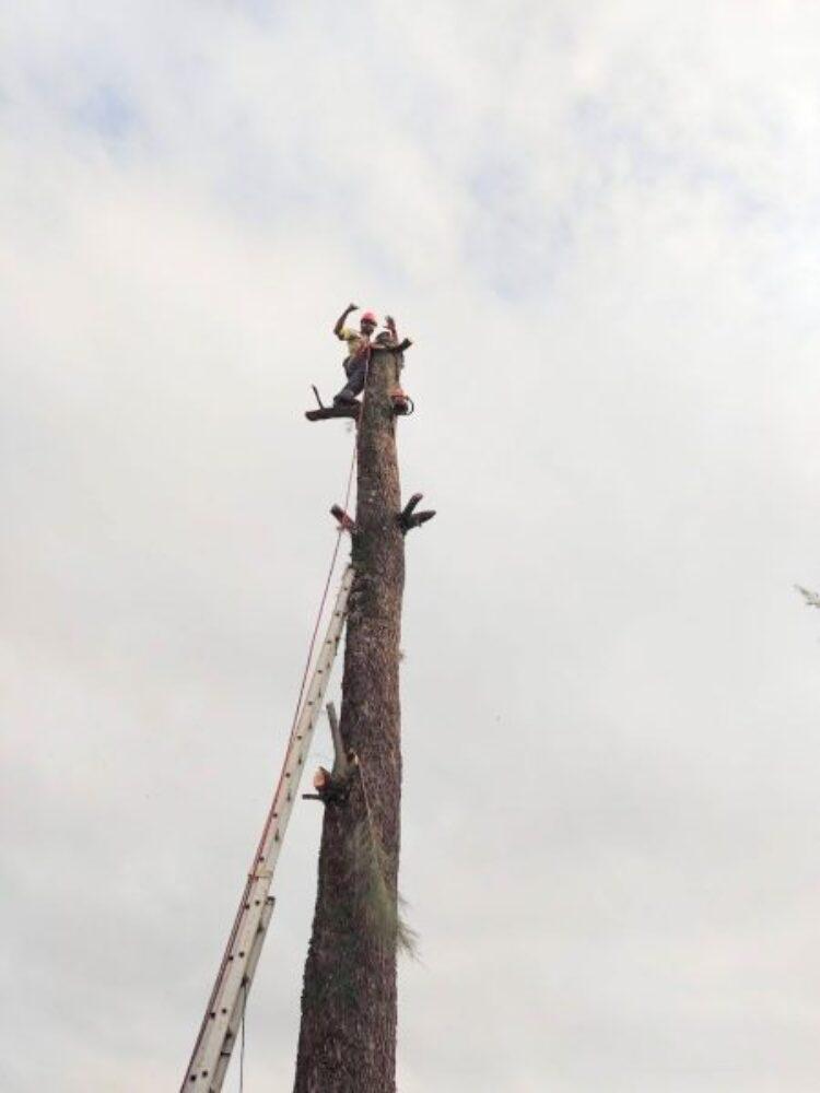Defesa Civil realiza ação em EMEB devido à risco de queda de árvore