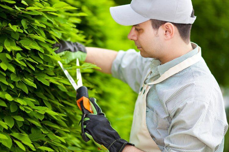 Milton Frungillo tem vagas abertas para o curso de jardineiro profissional